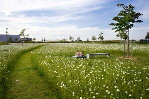 Montevrain_Park-Urbicus_landscape_architecture-08