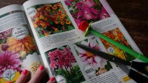 dana garden design BAKKER 3