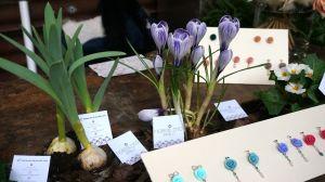 dana garden design figli dei fiori,como 13