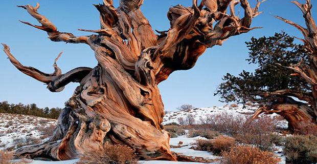 Architettura sostenibile e le piante pi belle del pianeta for Foto di alberi da colorare