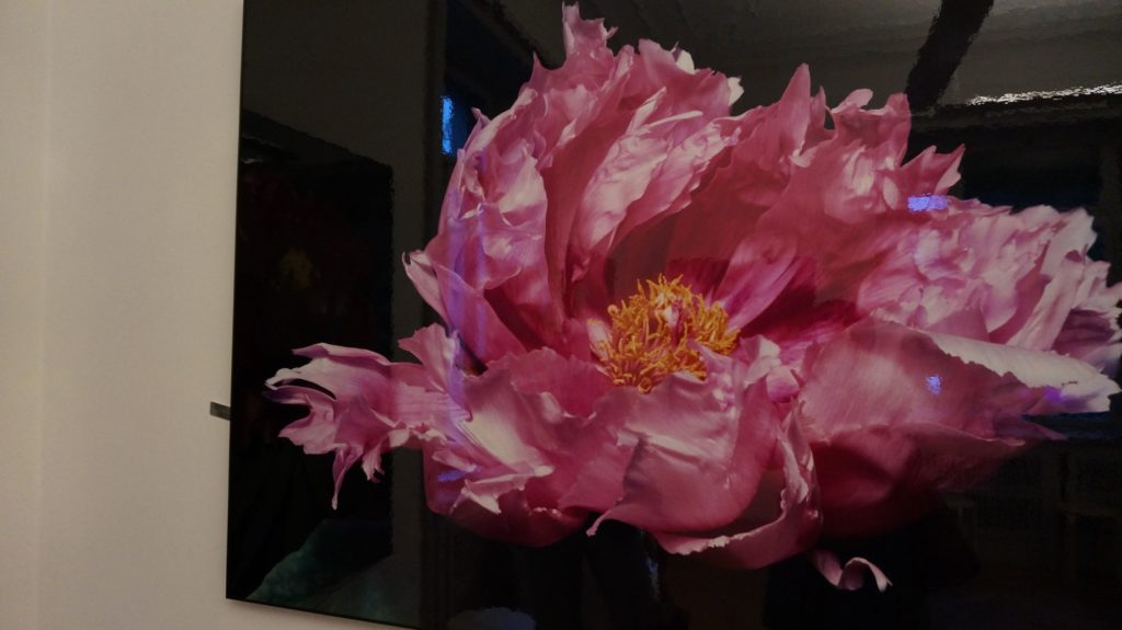 Blossom zine BLOG Piante e Dintorni Lugano10