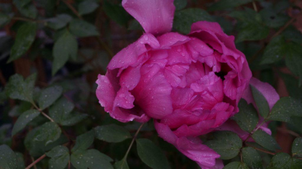 Blossom zine BLOG Piante e Dintorni Lugano4