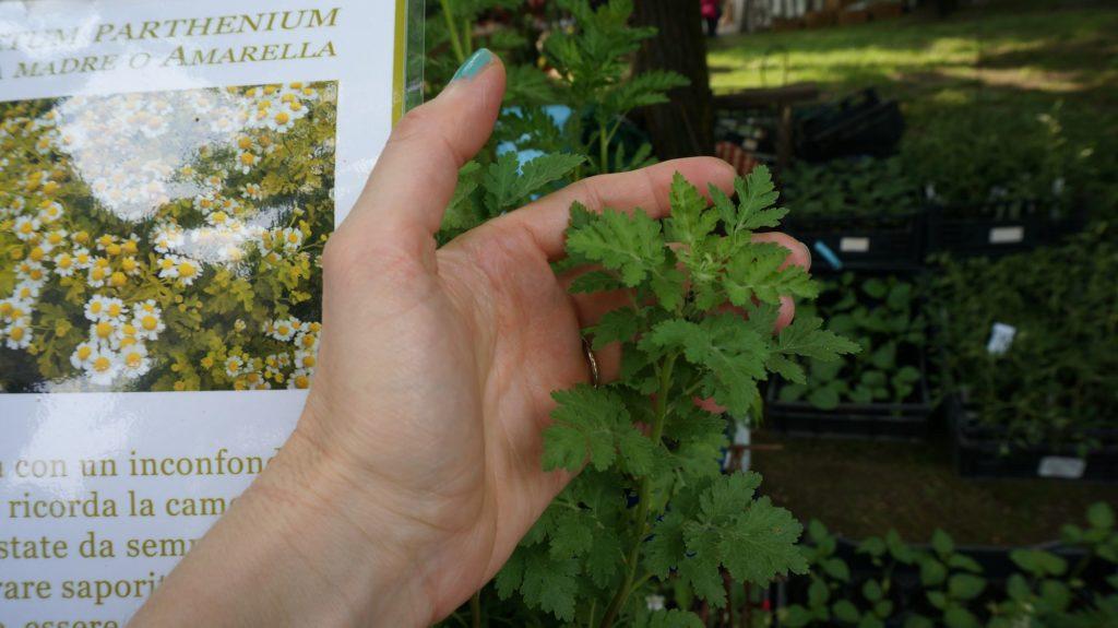 orticola 2015 blossom zine BLOG (10)