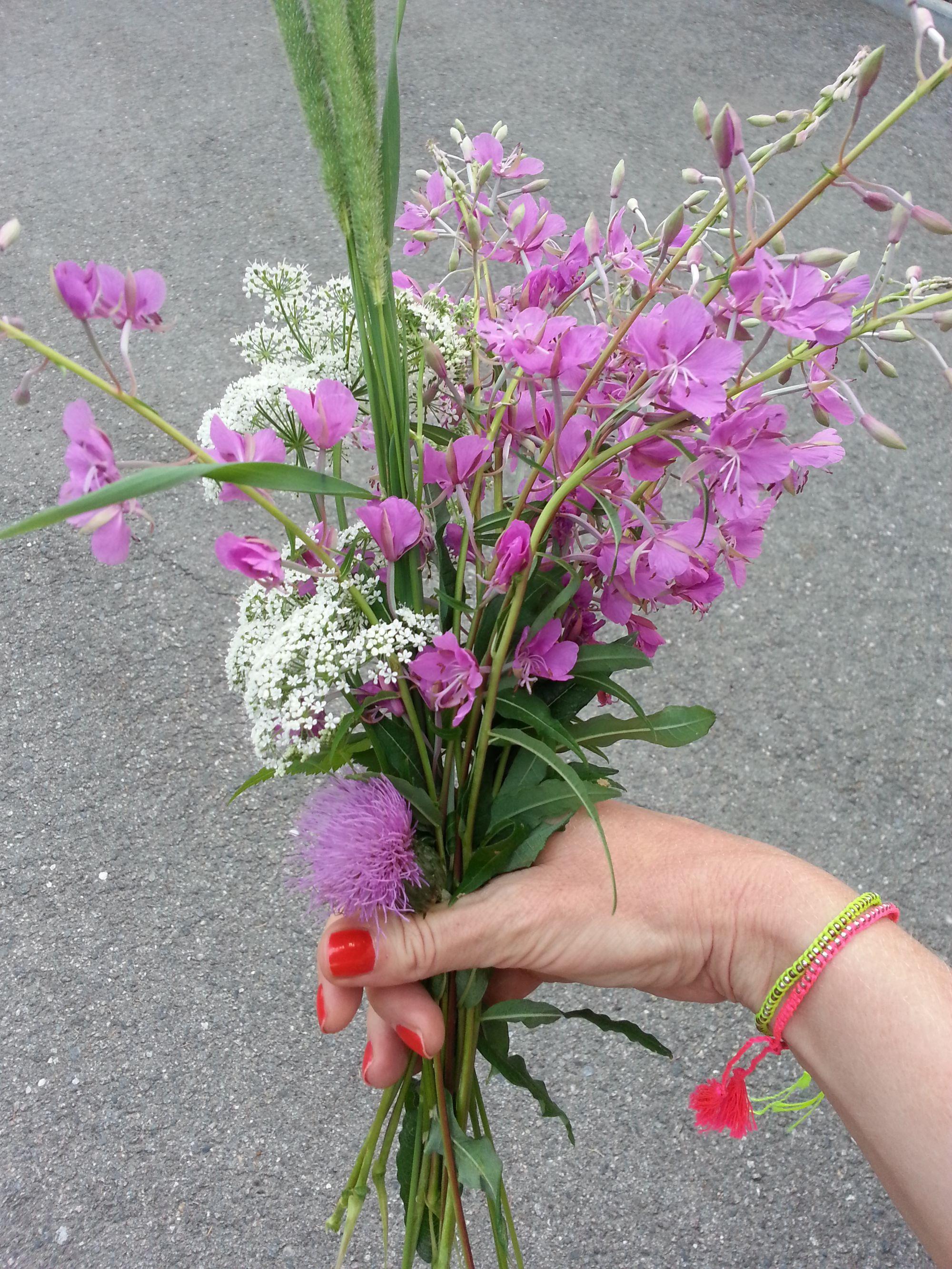 Blossom zine Gressoney Artemisia 2015 .11
