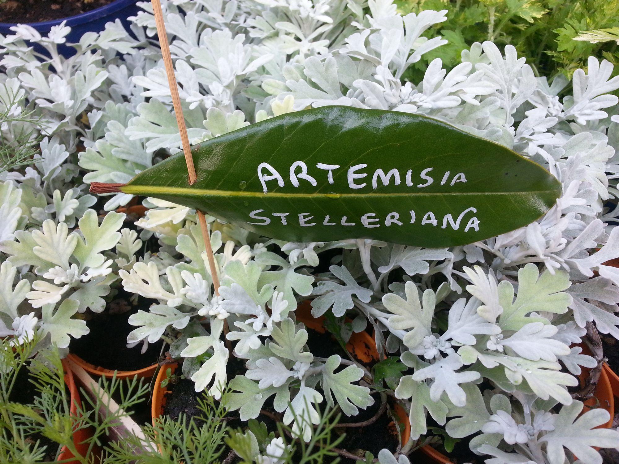 Blossom zine Gressoney Artemisia 2015 .4