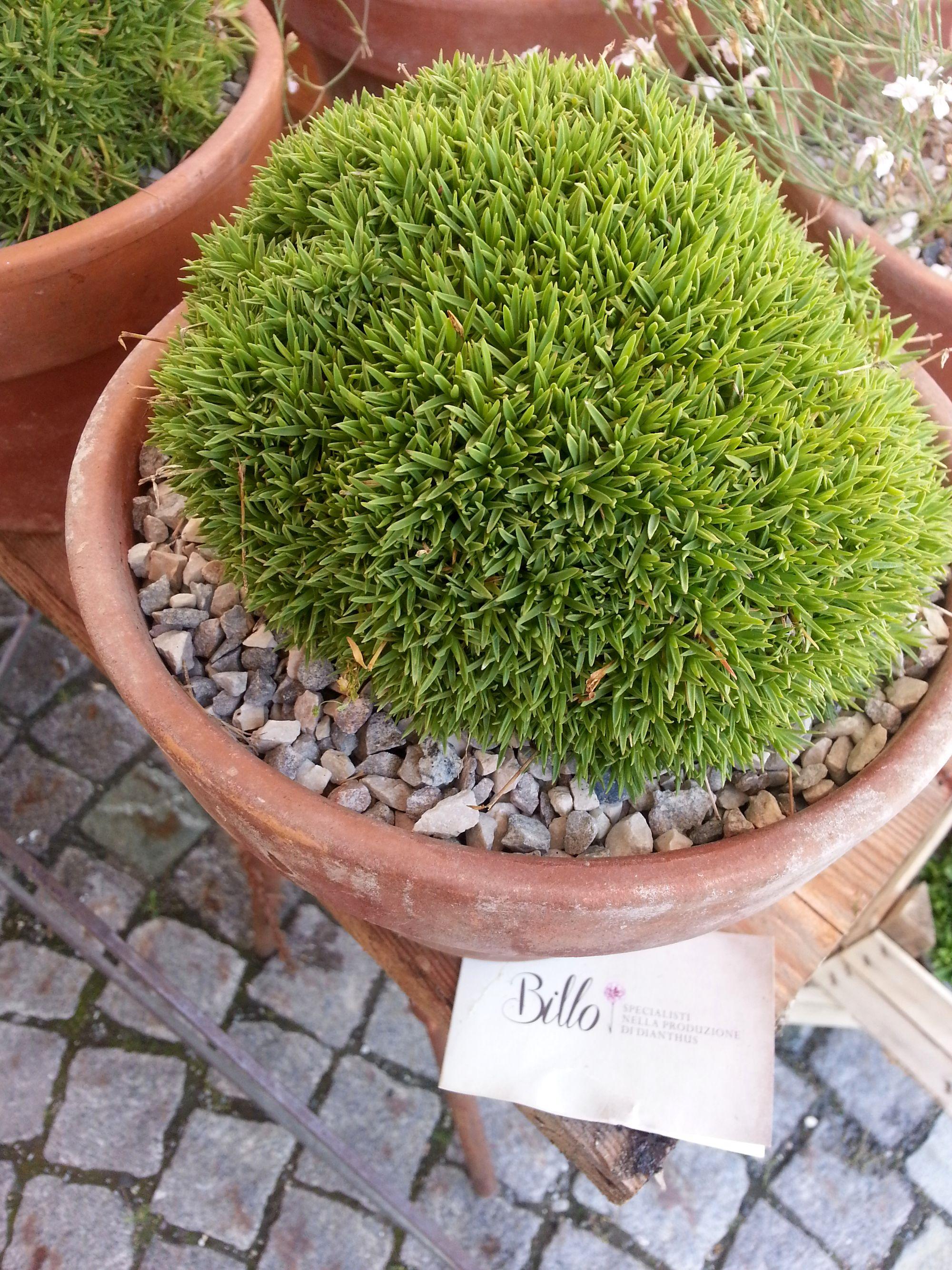 Blossom zine Gressoney Artemisia 2015 .6