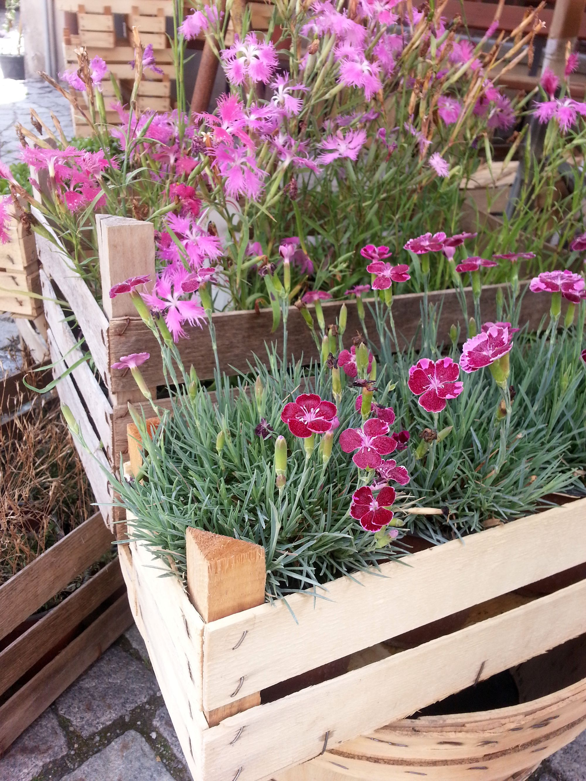 Blossom zine Gressoney Artemisia 2015 .7