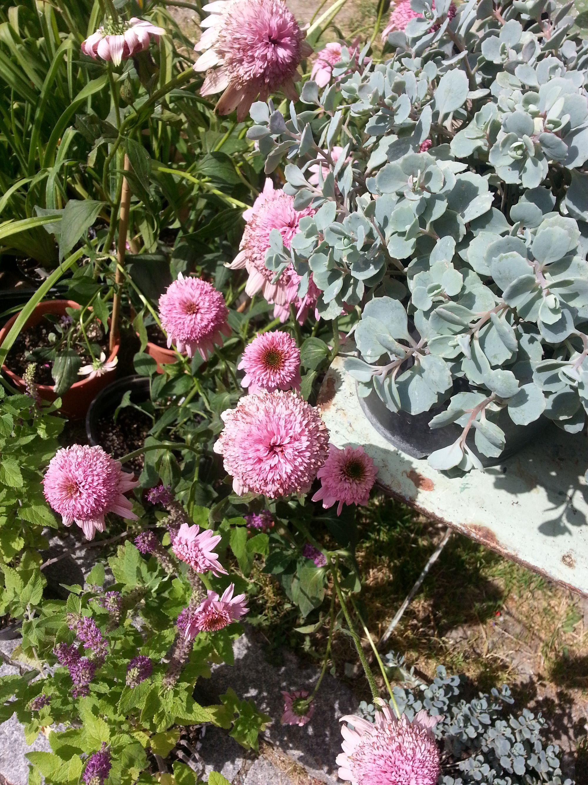Blossom zine Gressoney Artemisia 2015 .9