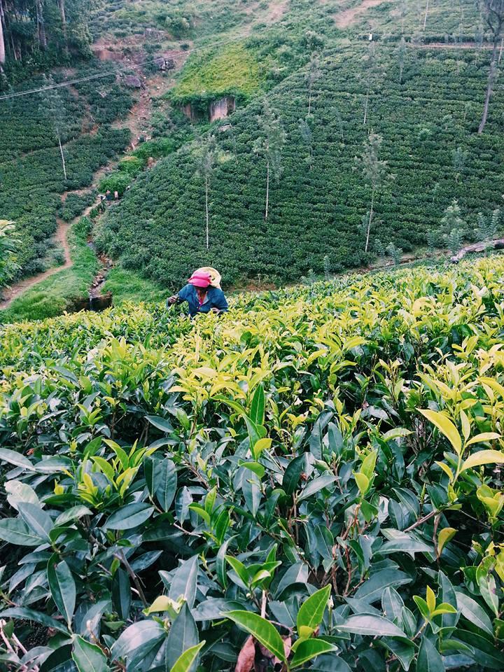 Blossom zine viaggio in Sri Lanka 9