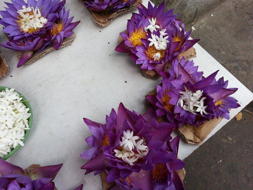 Blossom zine viaggio in Sri Lanka