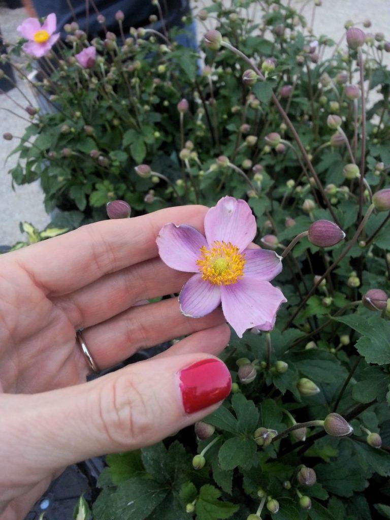 Blossom zine blog Perugia Flower Show 2015 (17)