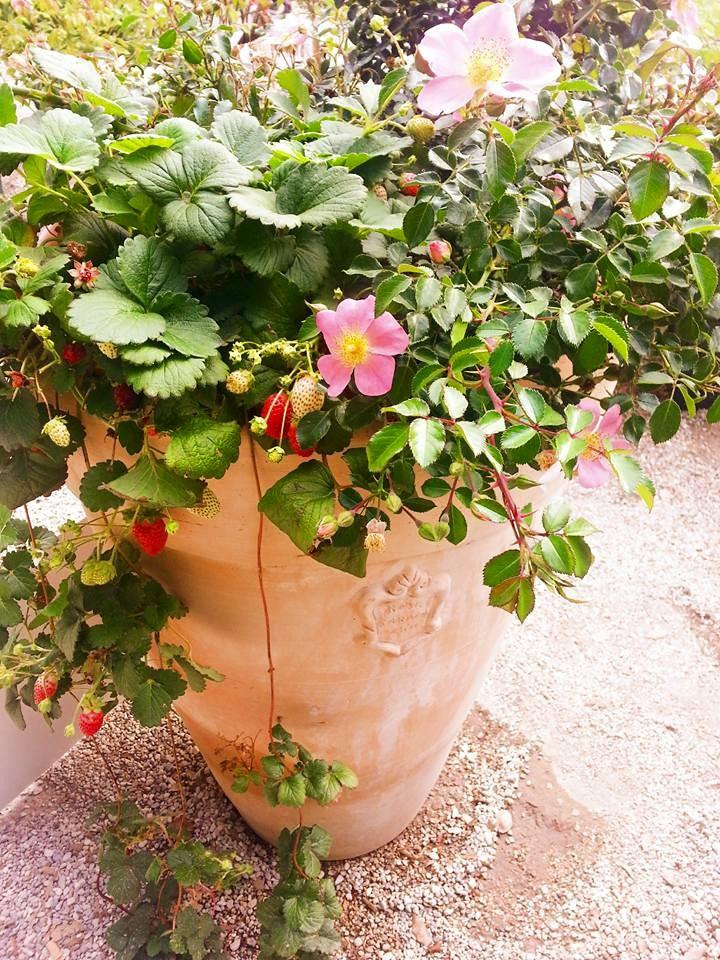 Blossom zine blog Perugia Flower Show 2015 (22)