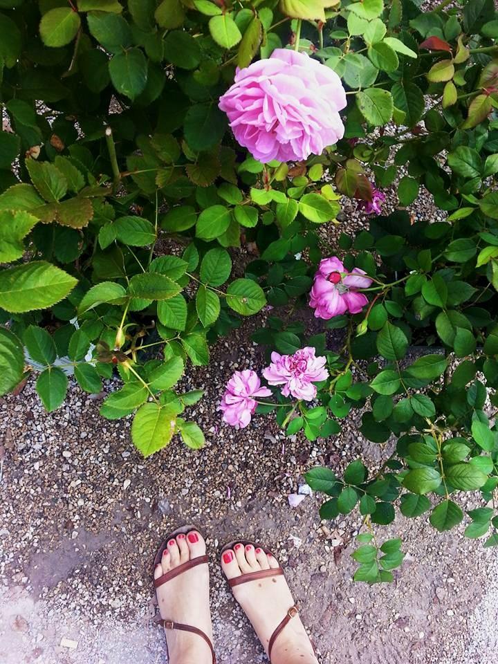 Blossom zine blog Perugia Flower Show 2015 (23)