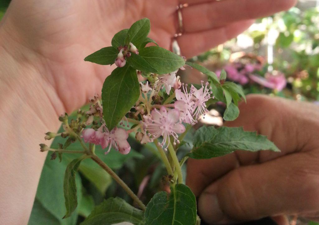 Blossom zine blog Perugia Flower Show 2015 (8)
