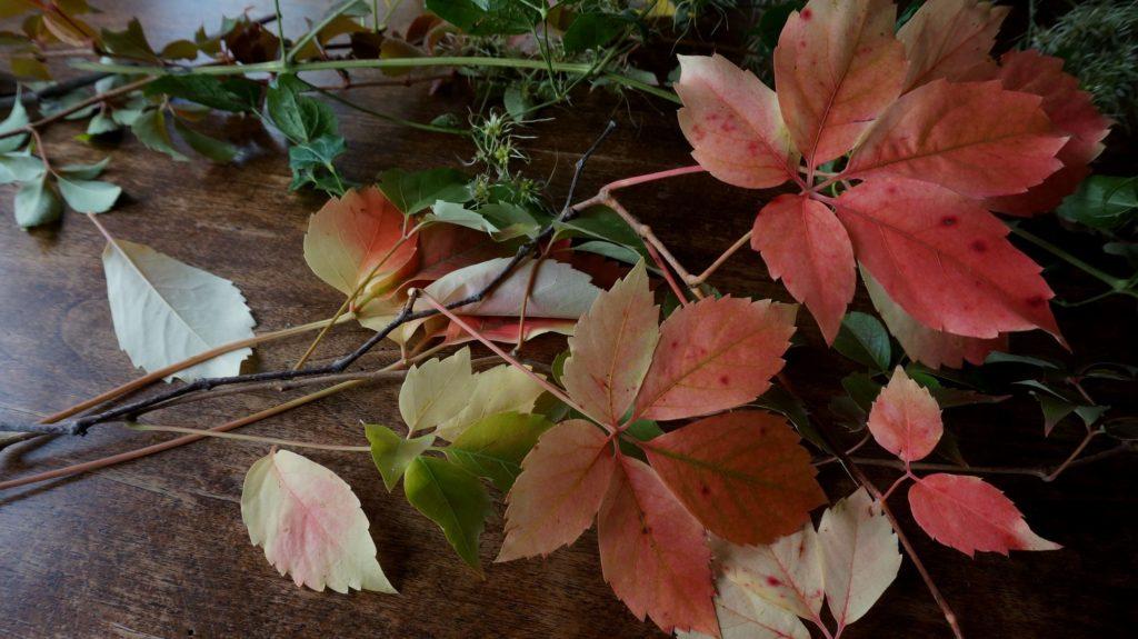 blossom zine blog nature morte 01