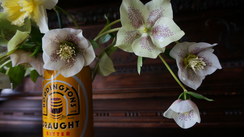 Blossom zine Helleborus orientalis (4)