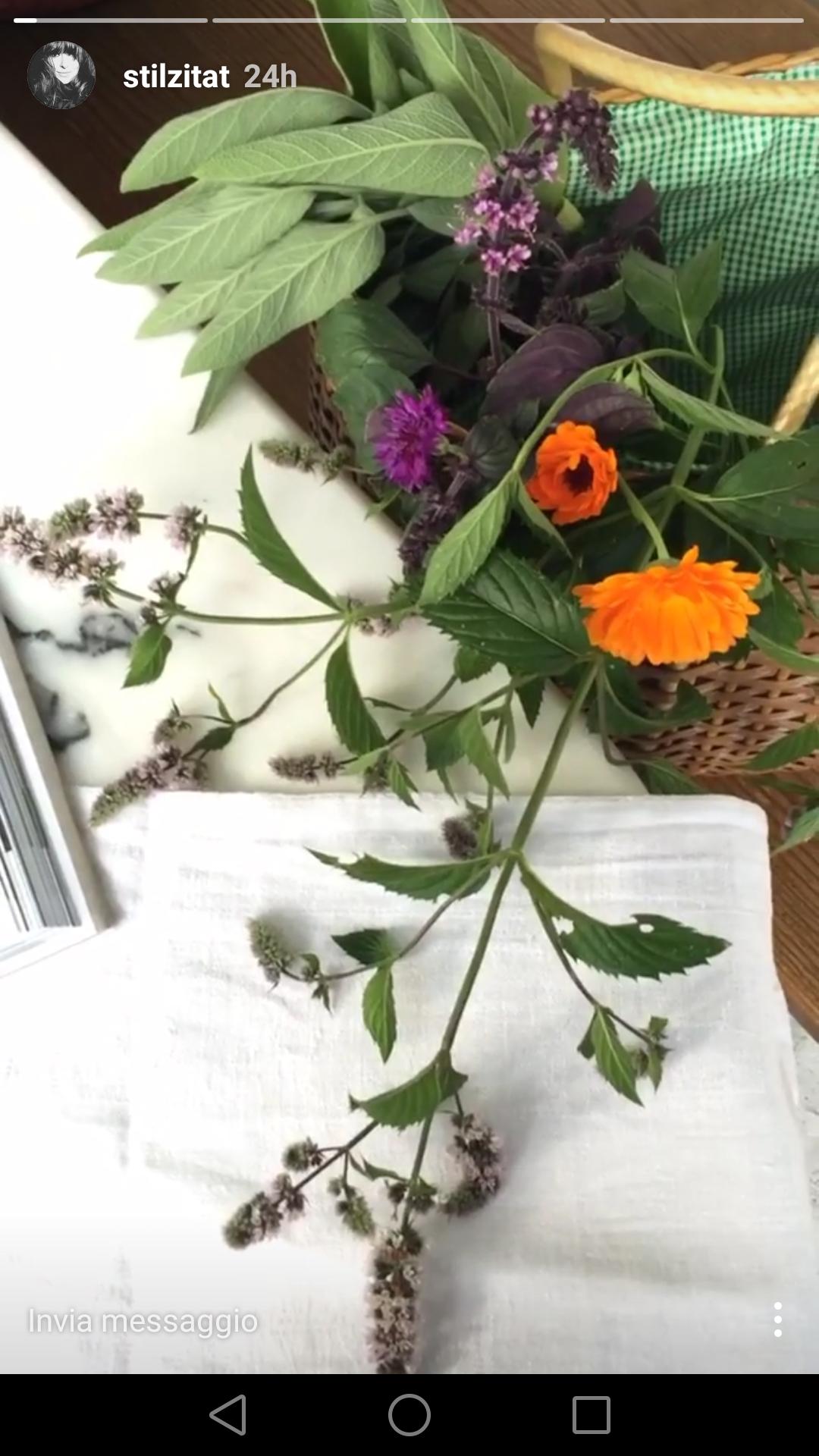 blossom zine instagram stories  (3)