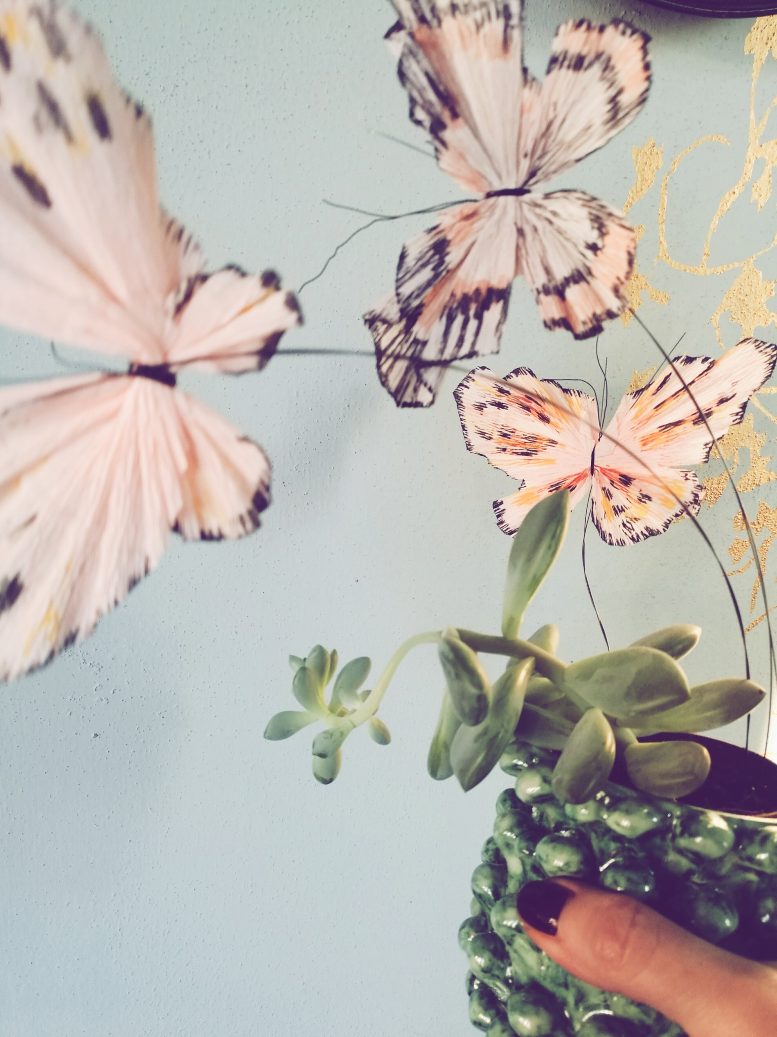 blossom zine farfalle