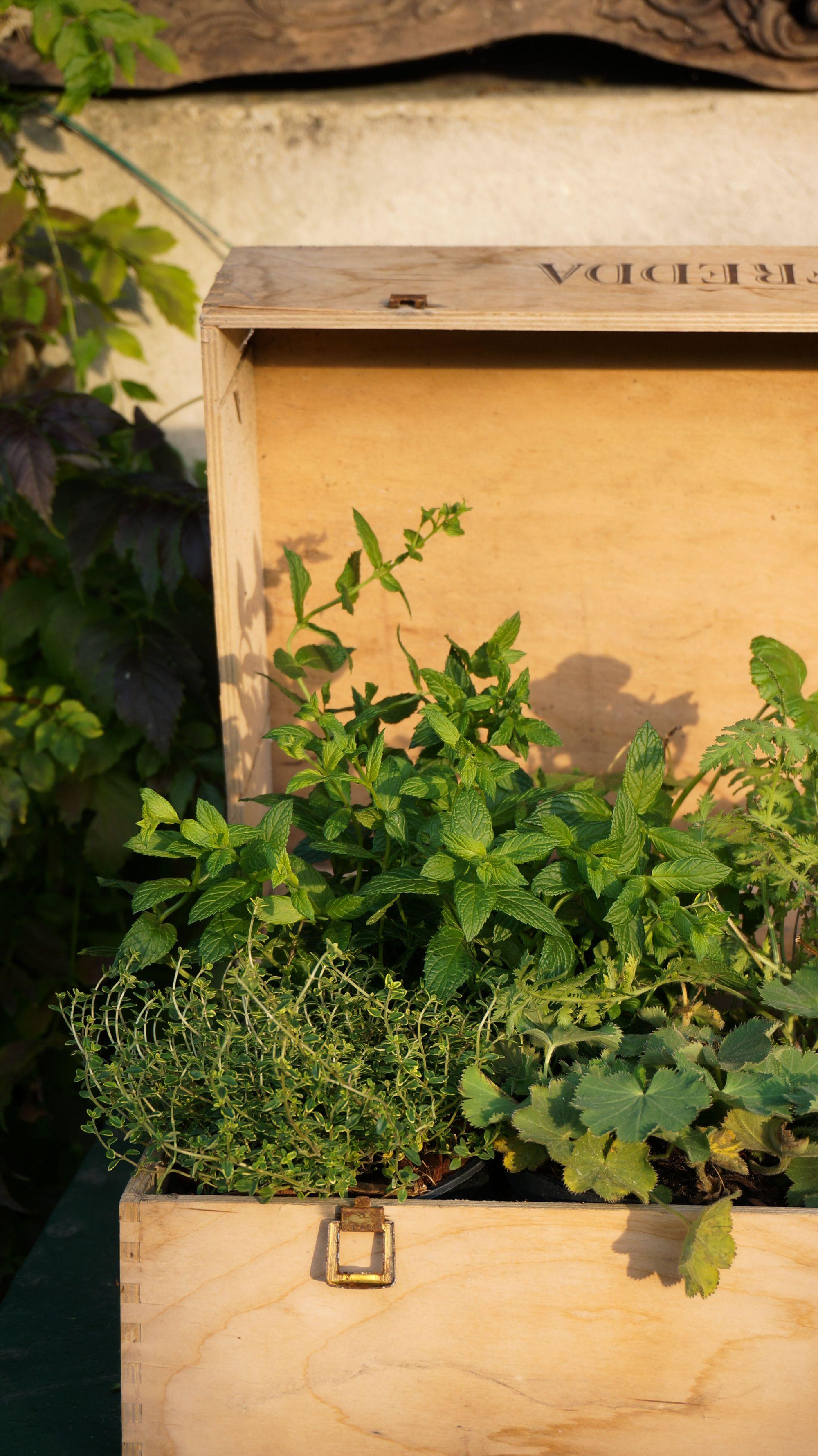 giardini erbe blossom zine br_-8 ricola ricola