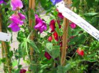 I giardini dei mestieri il carrozziere blossom zine blog for Corso carrozziere