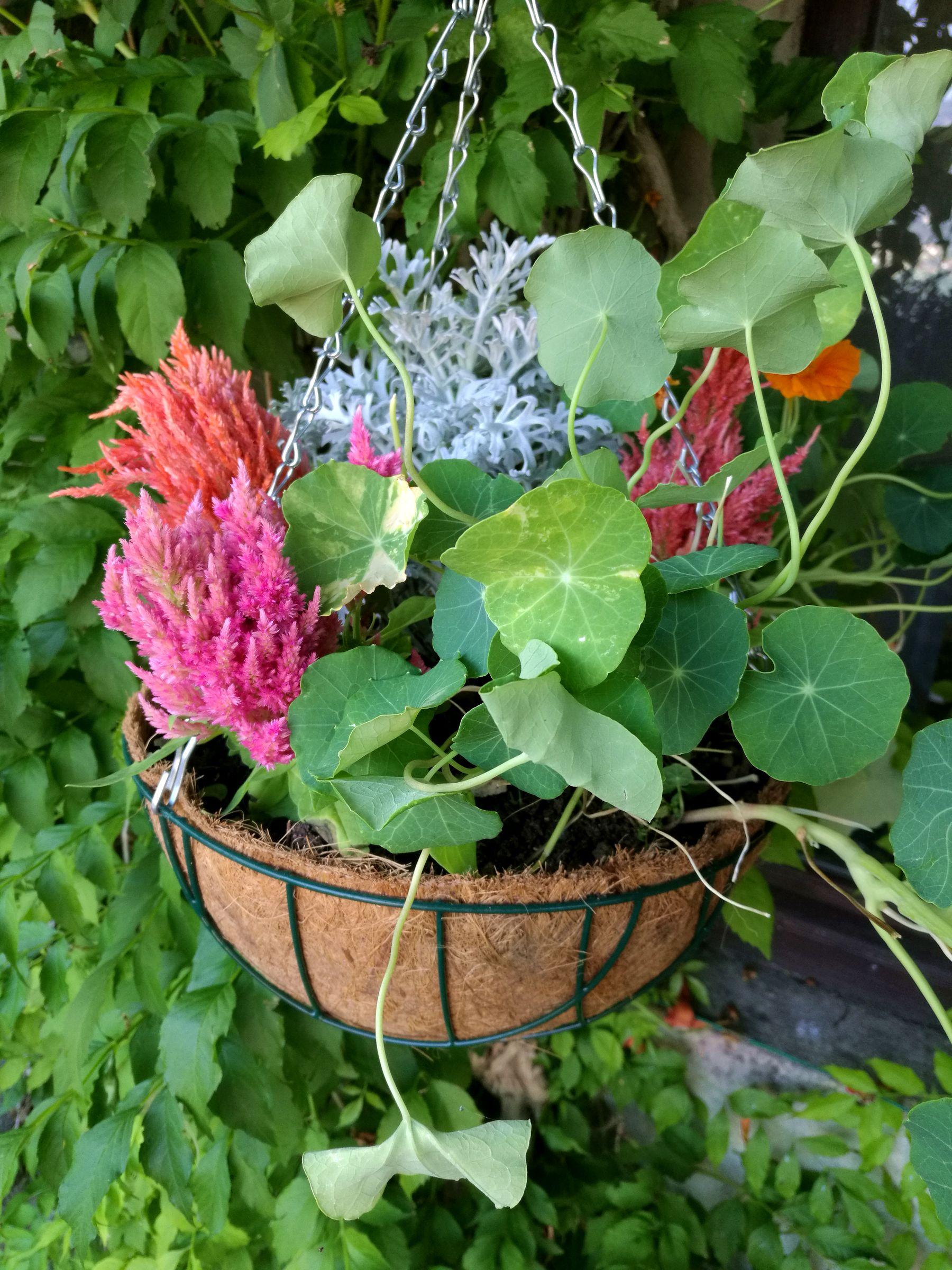 Cocco Basket Blossom zine Poku giardini