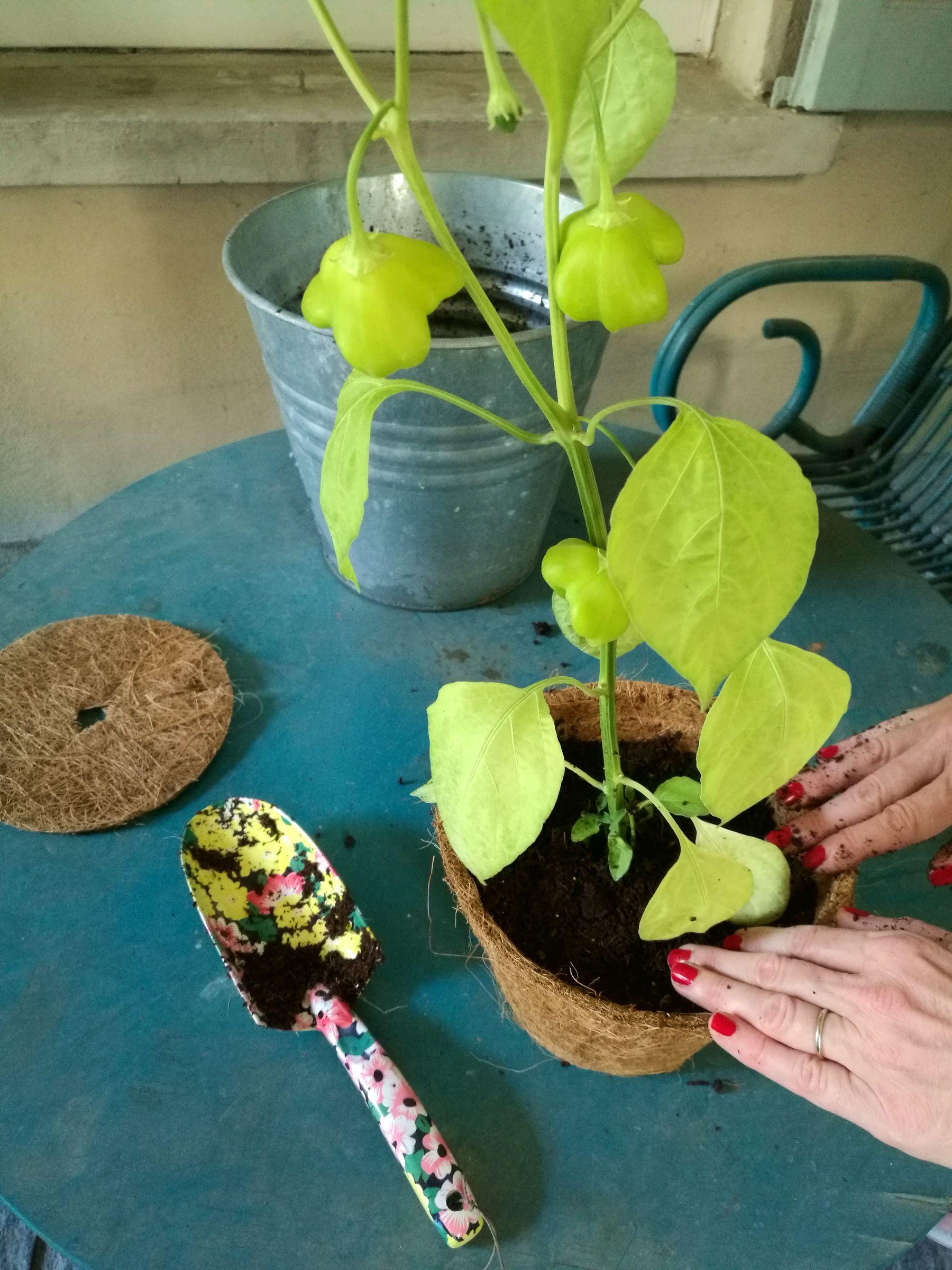 Vasi in fibra di cocco Blossom zine Poku giardini