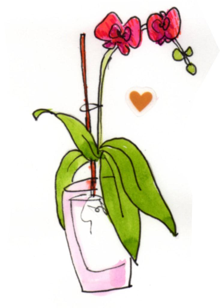 scheda da scaricare Blossom zine orchidee