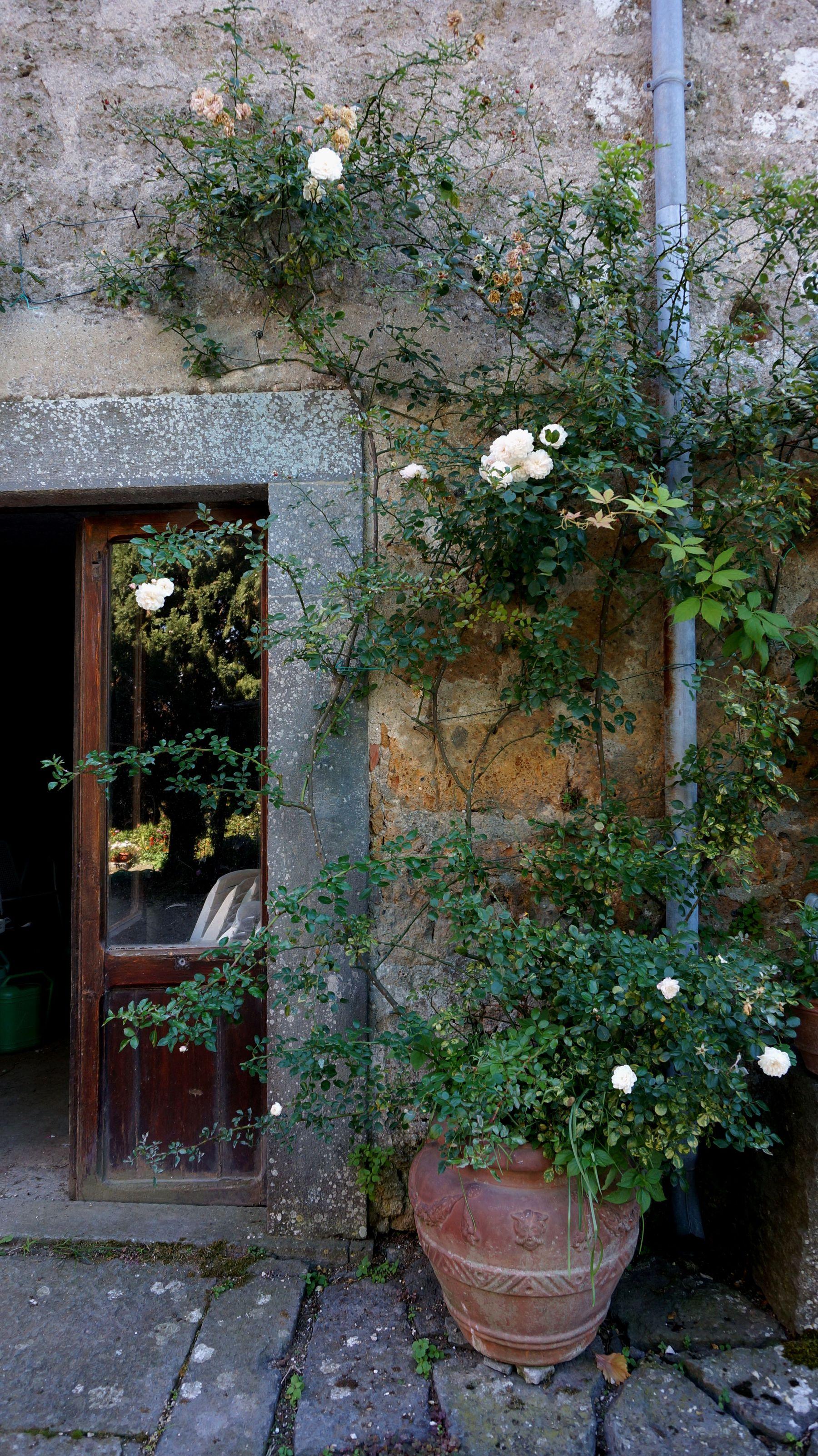 Convento della Fraternità SS. Vergine Maria Blossom zine viaggio Promo Tuscia