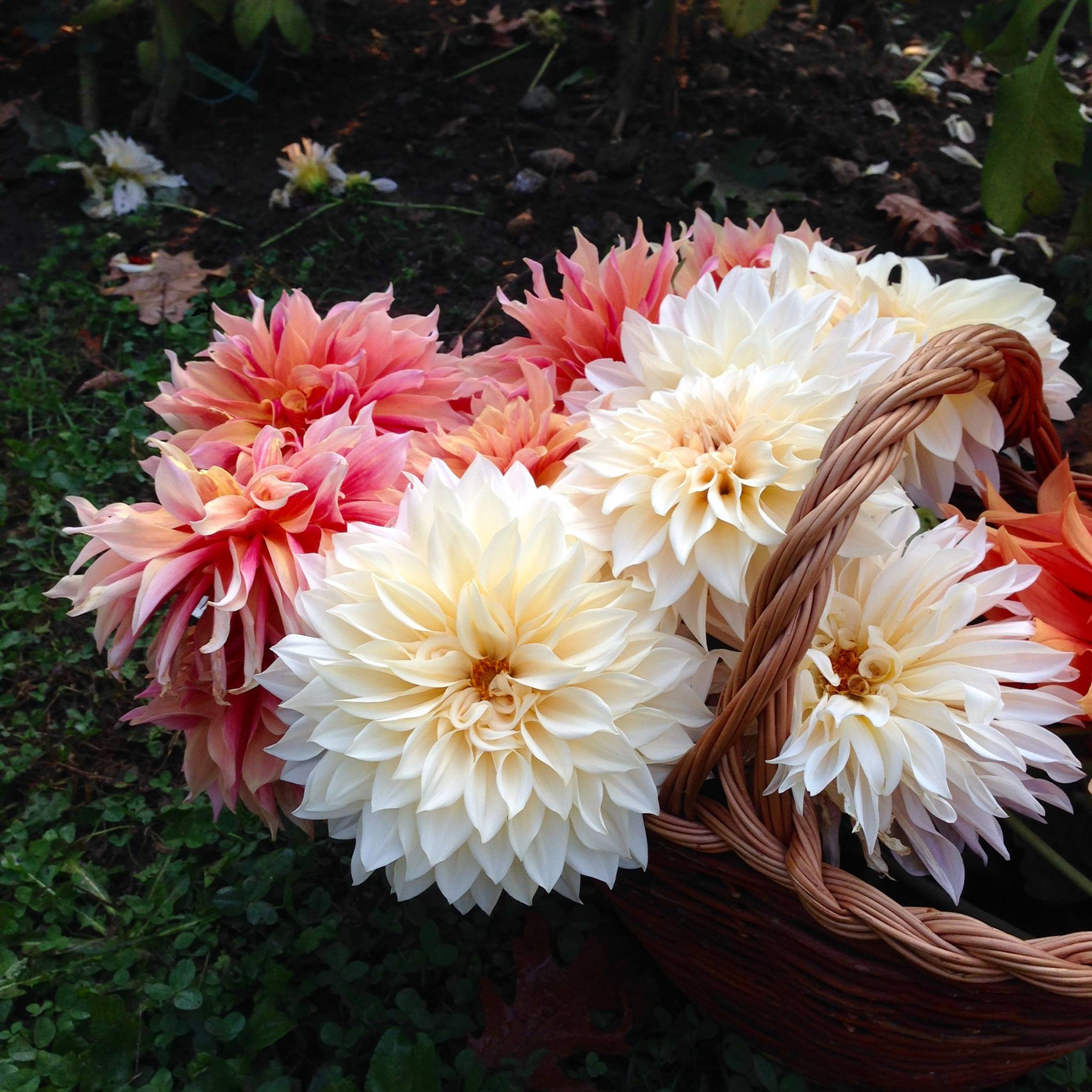 OFF Olga Flower Farm