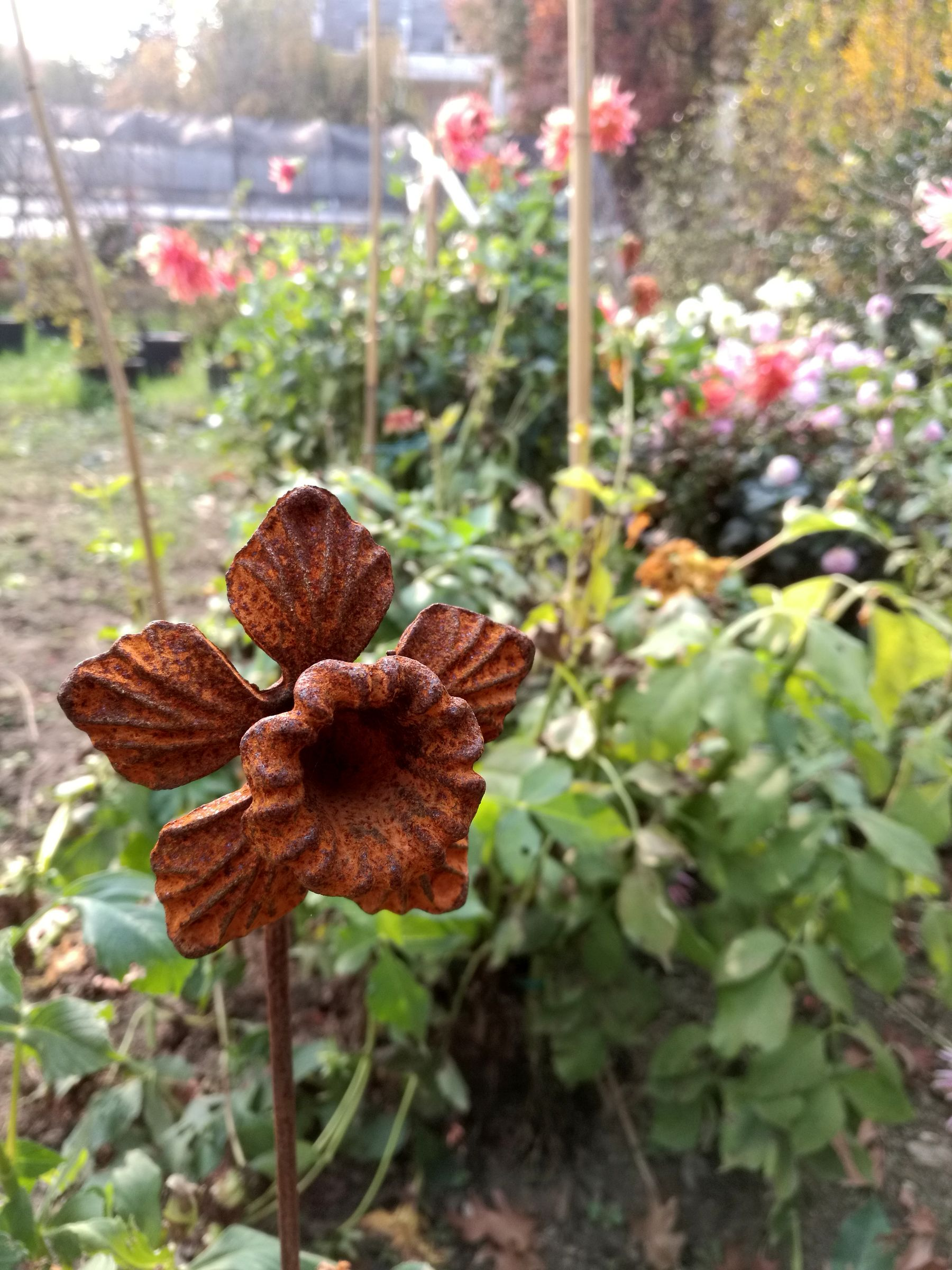blossom zine OFF olga flower farm NARCISI