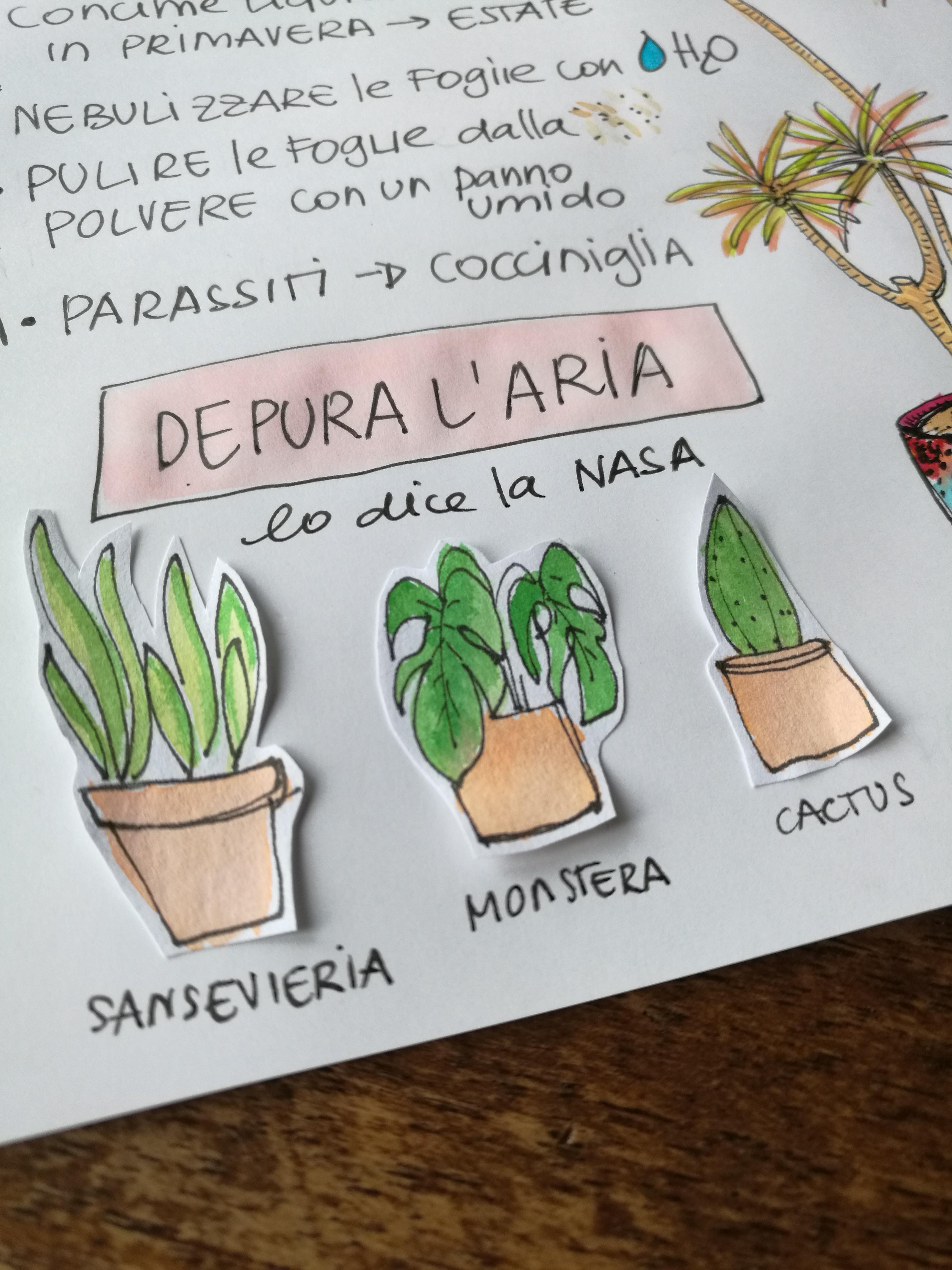 Pianta Tronchetto Della Felicità Potatura piante da appartamento : schede da scaricare e collezionare