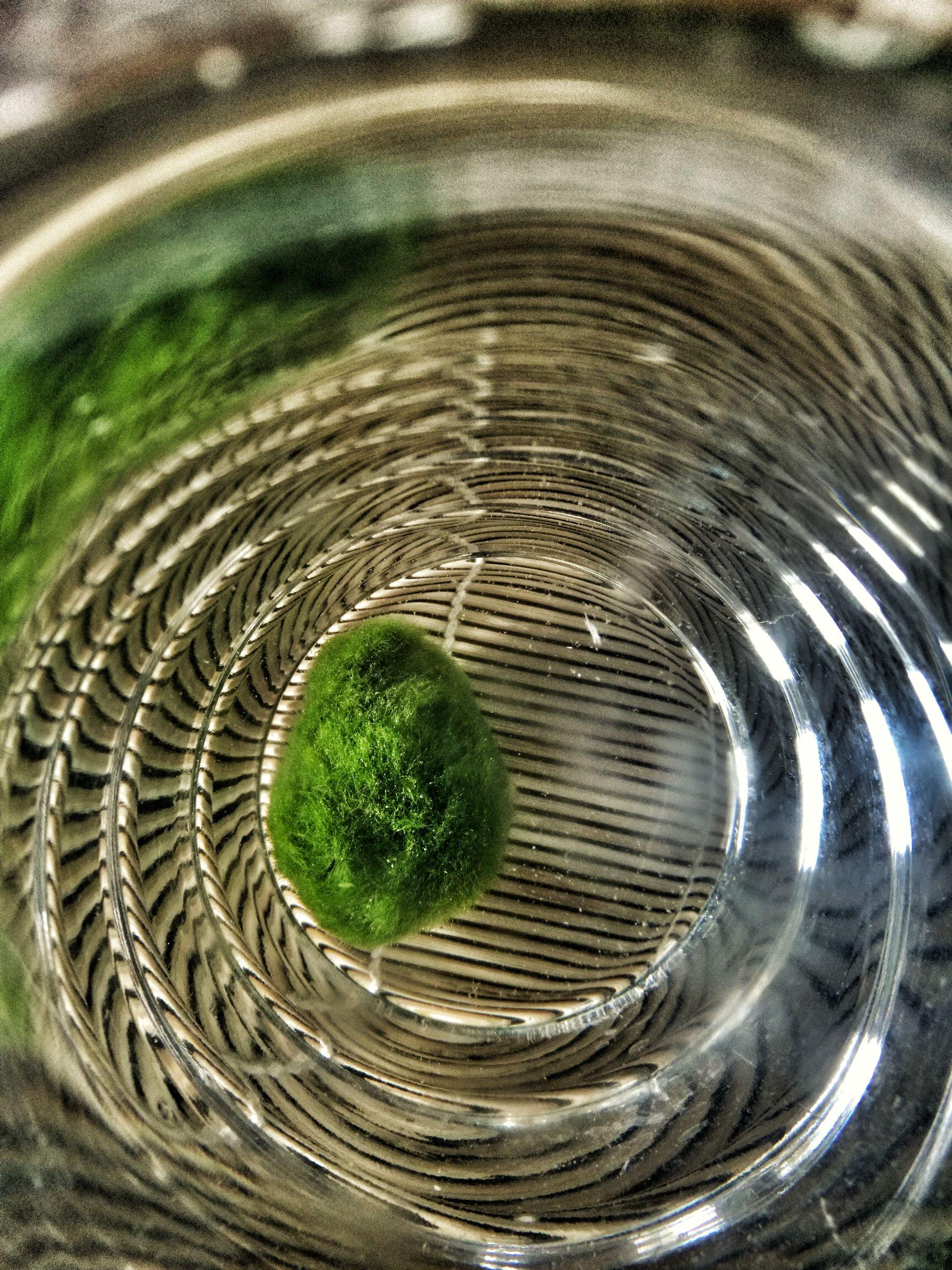 marimo alga giapponese a casa Blossom zine