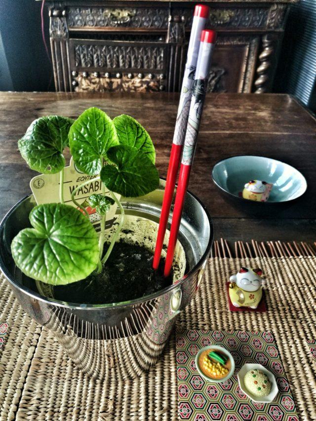 Piante Da Regalo : Piante tipiche giapponesi in regalo blossom zine