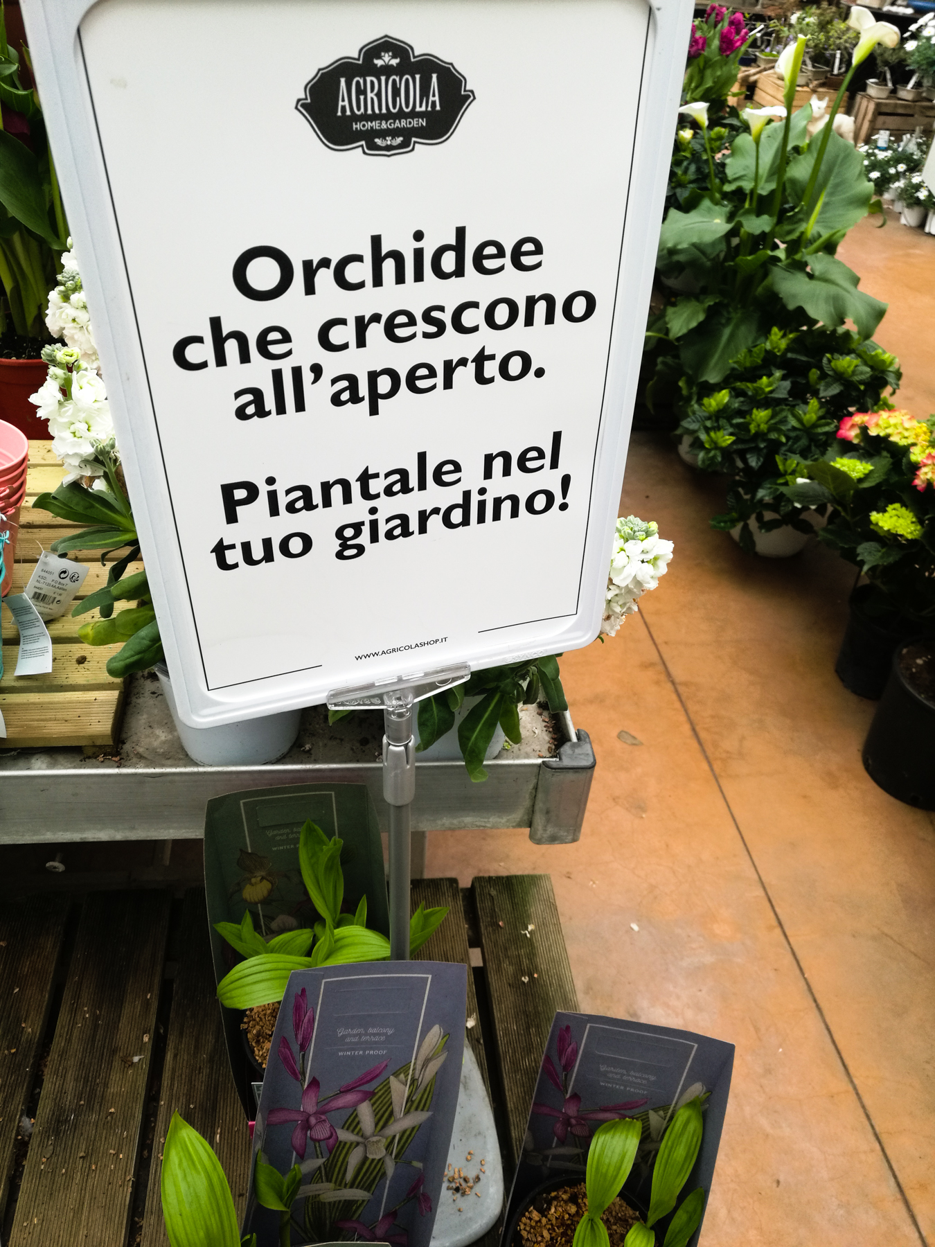blossom-zine-Agricola-Varese
