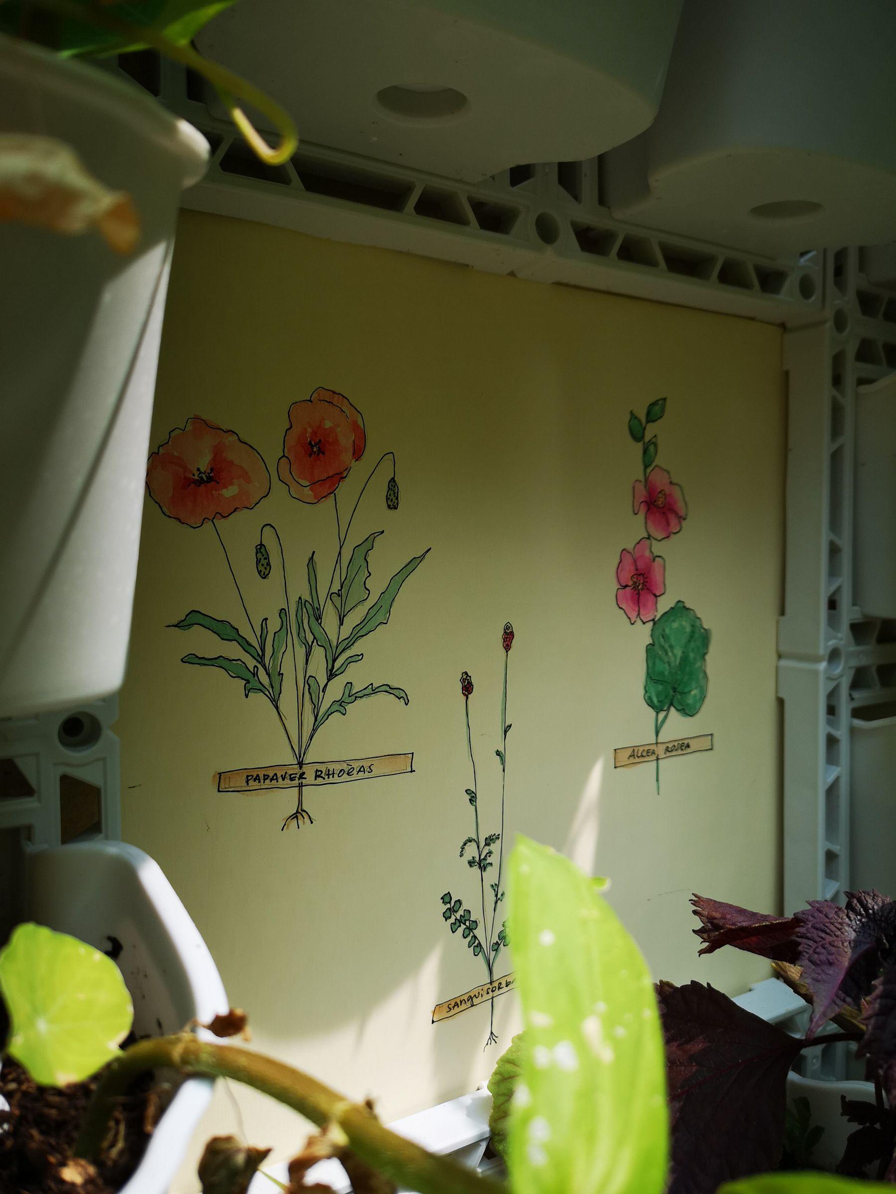 Blossom zine vertical garden Verdemax erbario