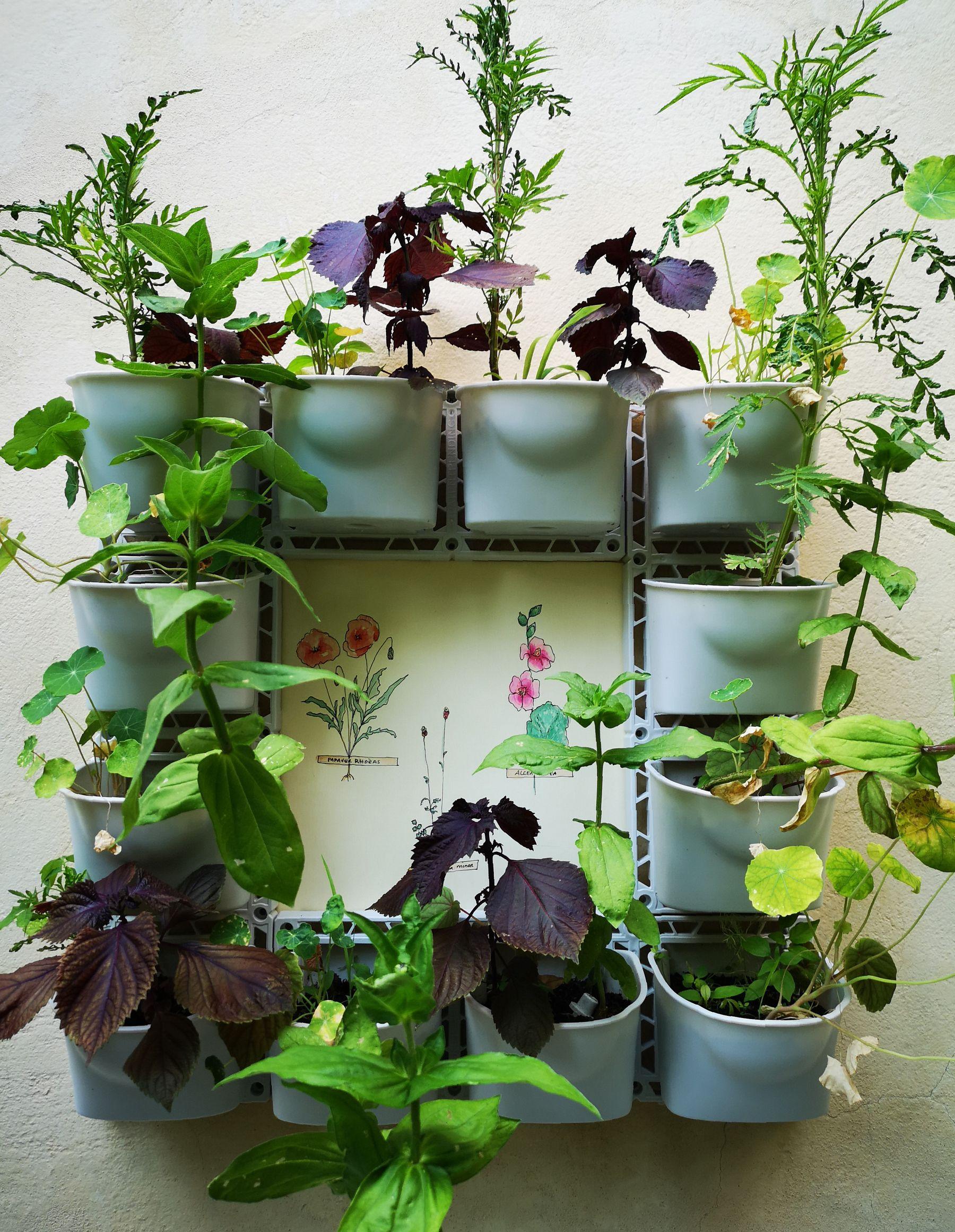 Blossom zine vertical garden Verdemax