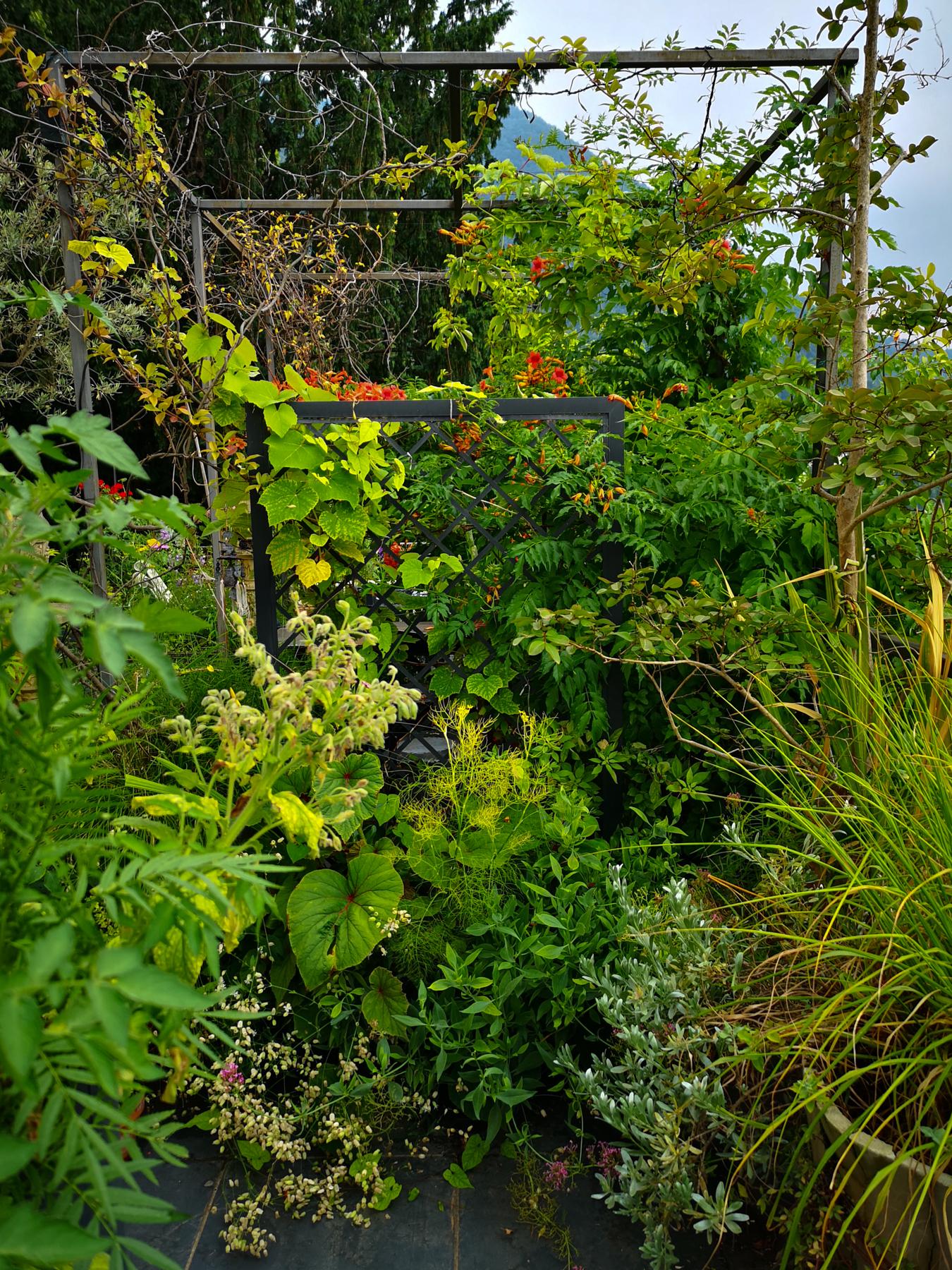 il terrazzo di Dana Frigerio / Blossom zine