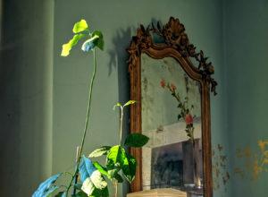 blossomzine crescere avocado da seme