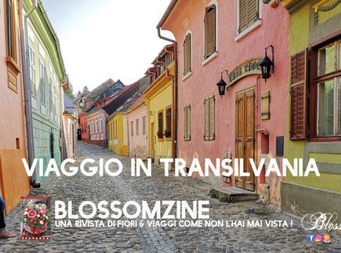 Blossom zine Romania