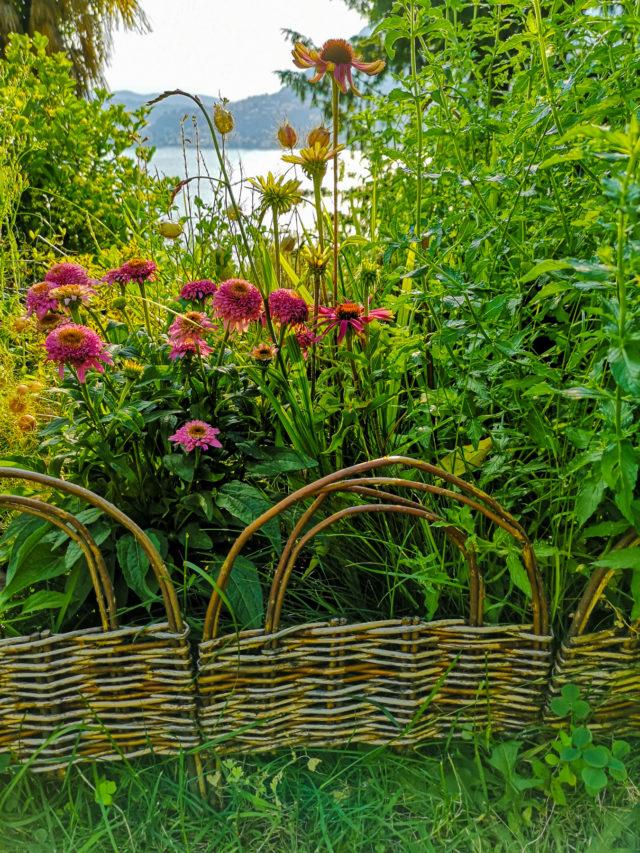 Blossomzine verdemax bordo ad arco in salice bordura mista inglese