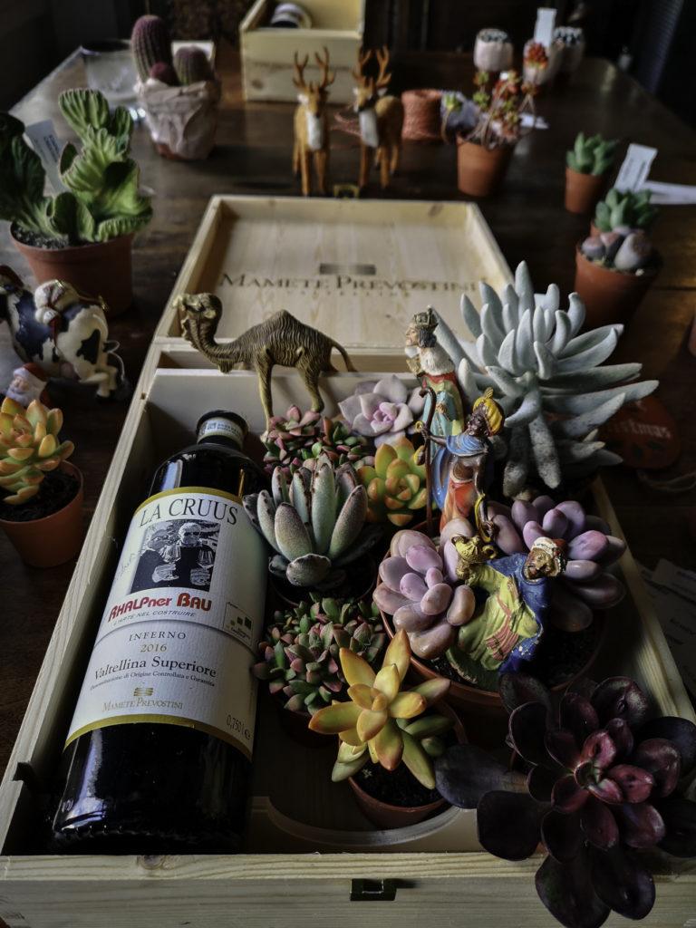 Natale inconsueto vino e piante grasse blossomzine per cactusmania