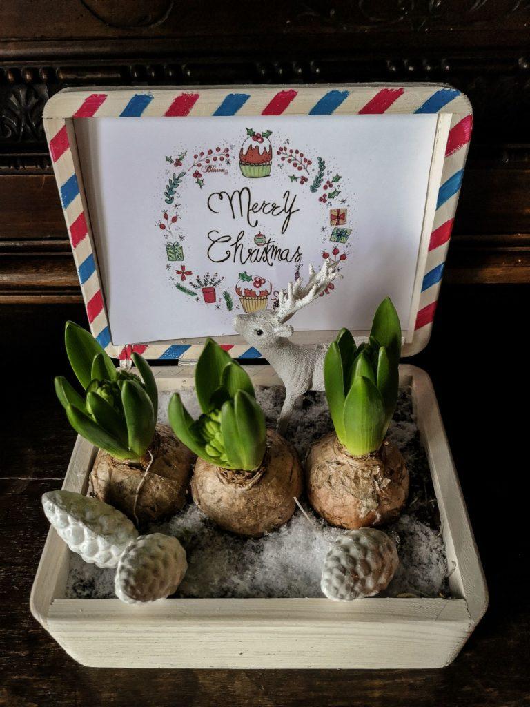 Blossomzine per Leroy Merlin BOX natalizia con giacinti