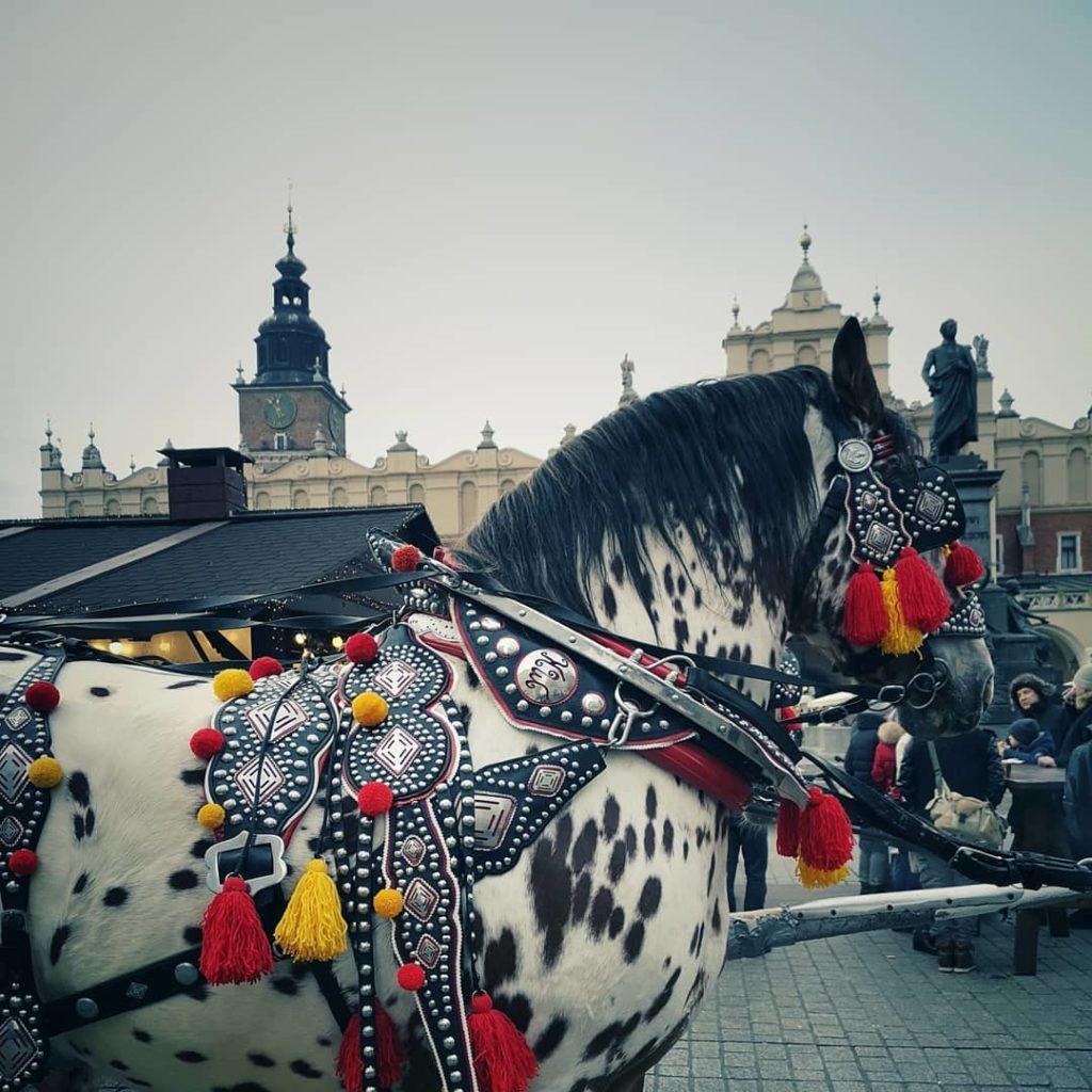 blossomzine Cracovia cosa vedere
