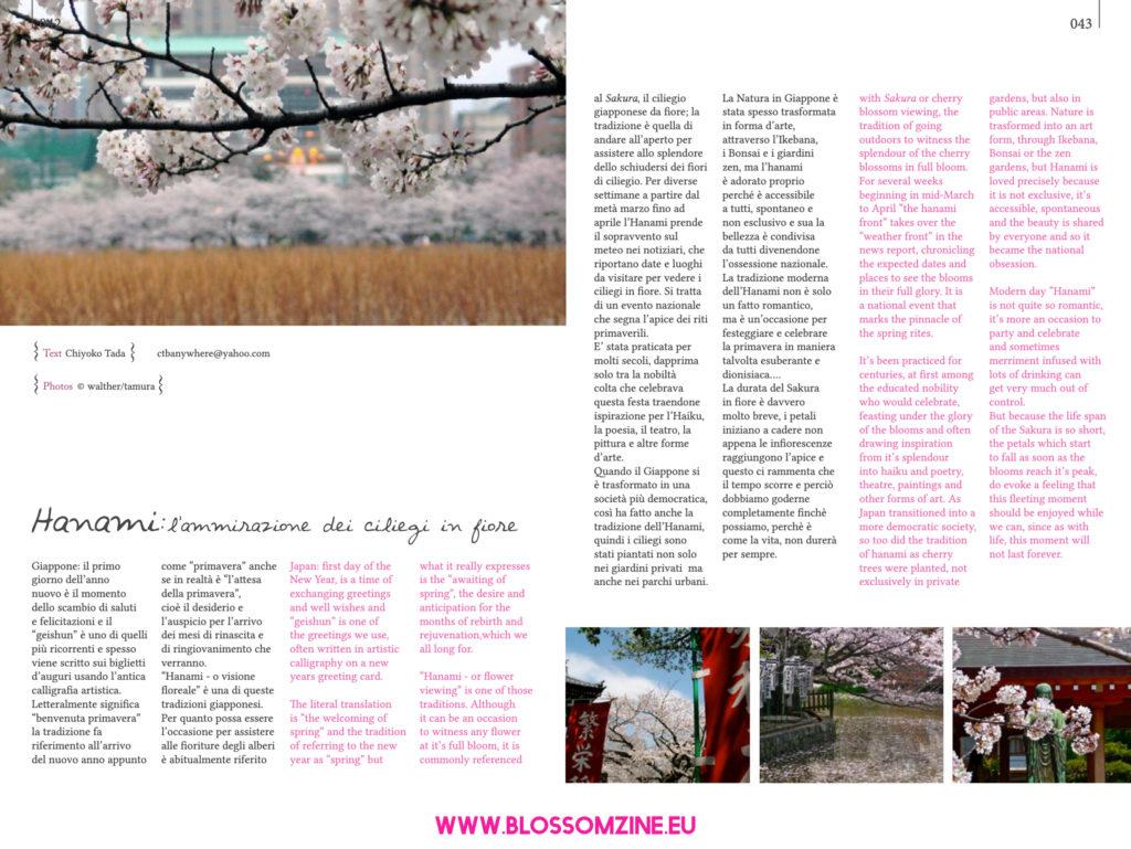 Hanami, l'ammirazione del ciliegi in fiore in Giappone