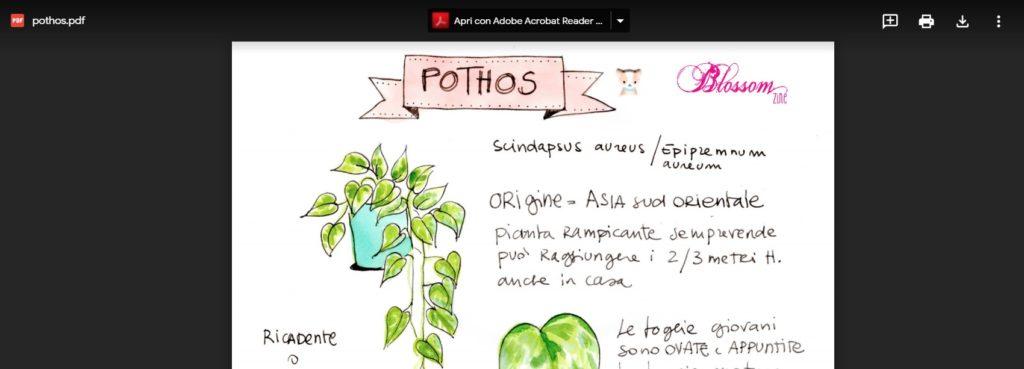 Scheda coltivazione POTHOS da scaricare /Epipremnum aureum G.S.Bunting o Scindapsus aureus
