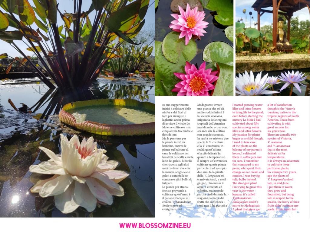 Le piante acquatiche del vivaio Le Moie, intervista su Blossomzine