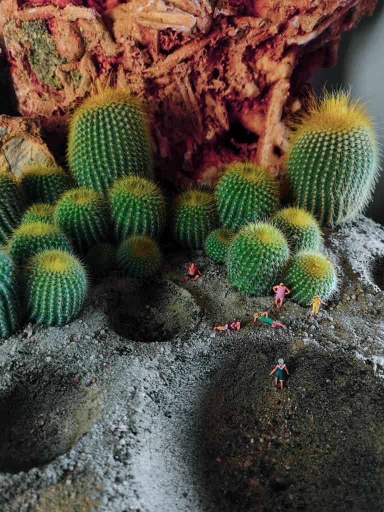 QUIZ FACILE dove siamo? La superficie si presenta cosparsa di crateri, avete anche riconosciuto le piante con le spine dorate di Cactusmania dello sfondo?