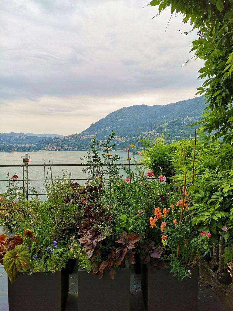 il mio terrazzo REGOLA A TUTTI UGUALI = FORMA + MATERIALE + COLORE blossomzine veca