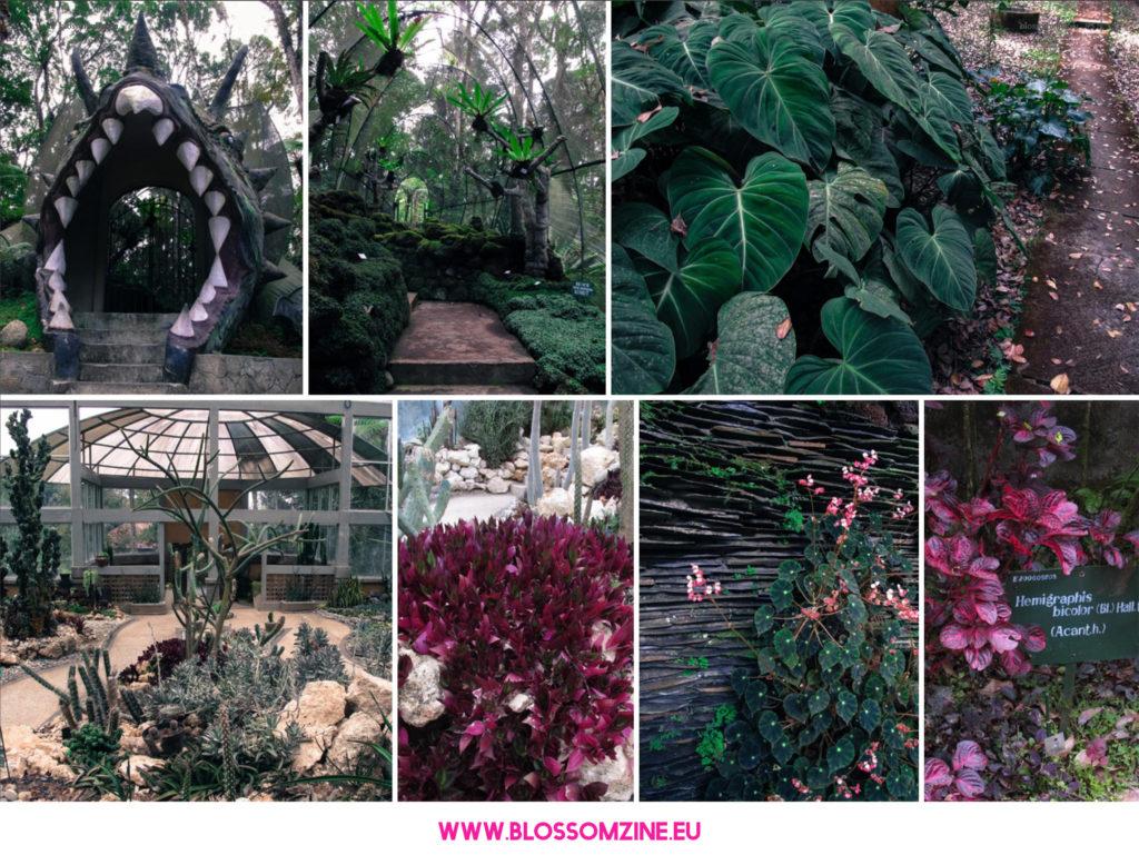 Il giardino botanico di Bali