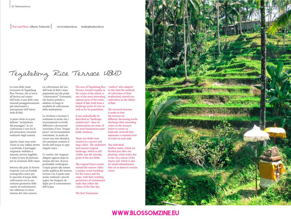Le risaie terrazzate di Bali